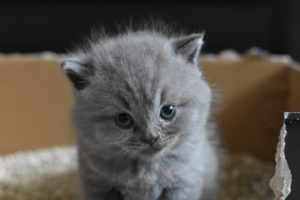 What Cat Litter Should I Use? Silica vs. Clay